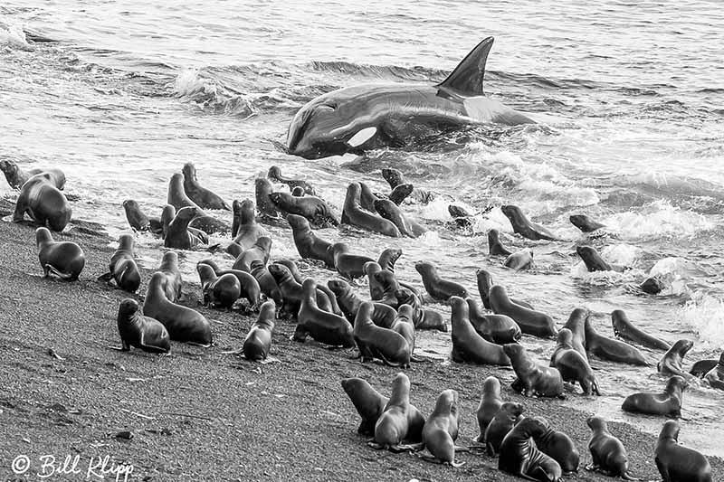Argentina photos by Bill Klipp