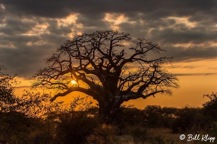 Tarangire National Park, Tanzania Africa photos by Bill Klipp