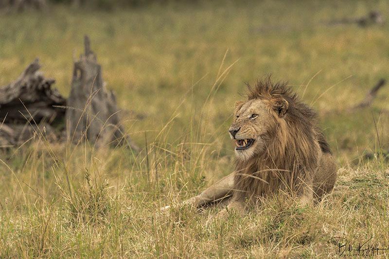 Maasai Mara, Kenya photos by Bill Klipp,