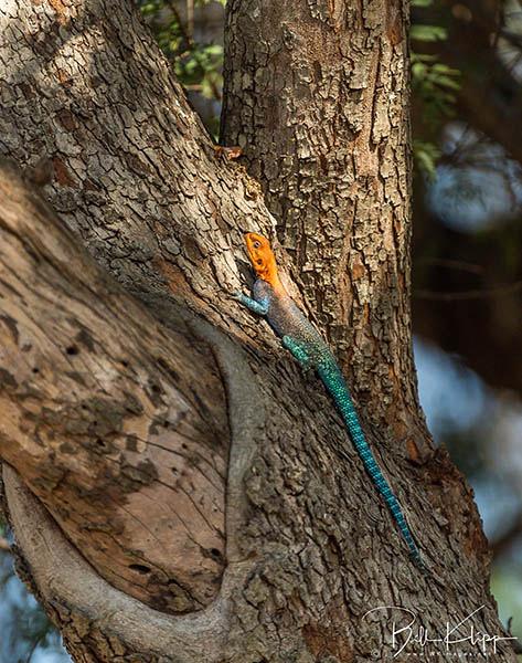Botswana Africa photos by Bill Klipp