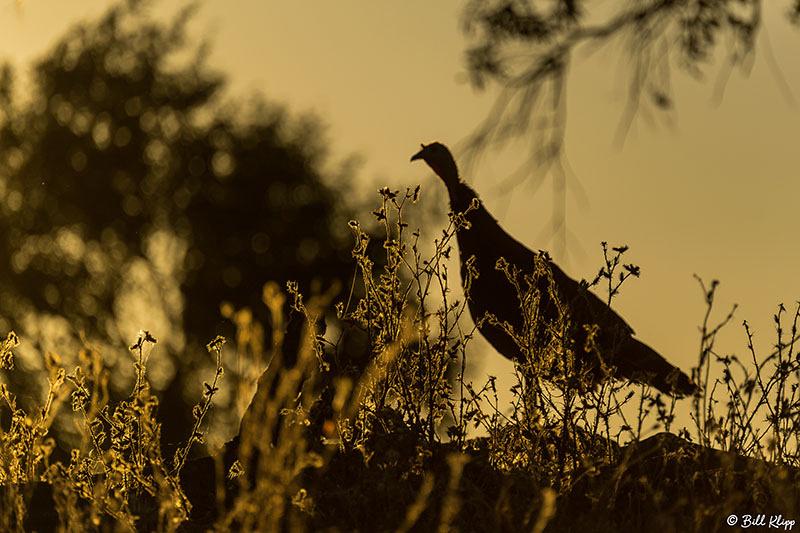 Turkey,  Discovery Bay Photos by Bill Klipp