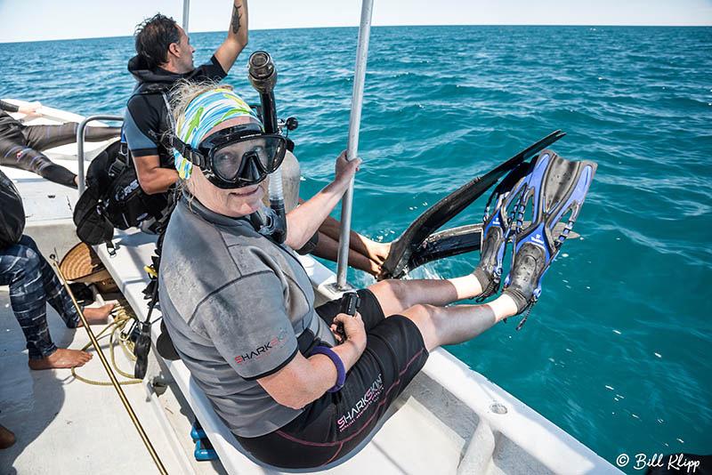 Whale Shark Research, Sea of Cortez, Baja Photos by Bill Klipp