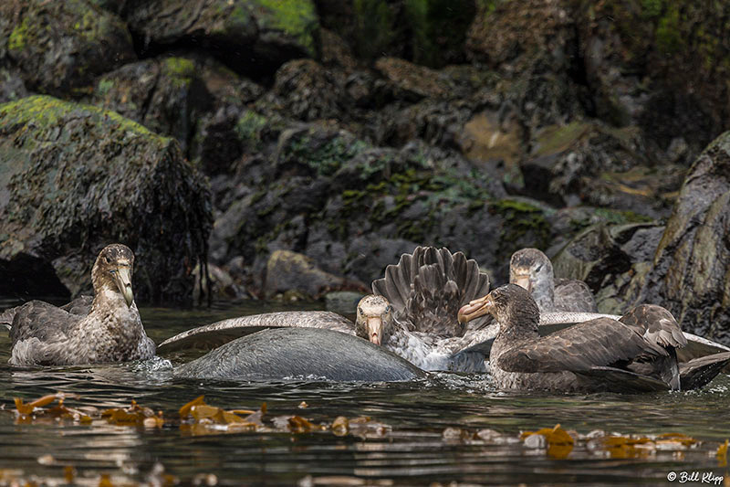 Larsen Habour, South Georgia Island, Photos by Bill Klipp