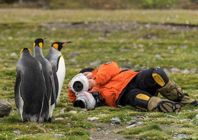 Elsehul, Albatross, King Penguin Colony Right Whale Bay, South Georgia Islands,  Photos by Linda Klipp