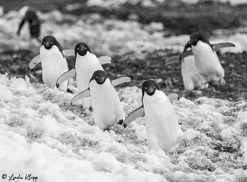 Brown Bluff Antarctica Photos by Linda Klipp