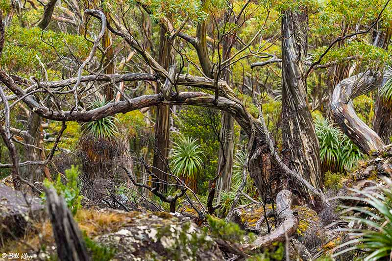 Mt Field, Tasmania, Australia, Photos by Bill Klipp