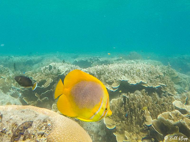 Underwater, Lizard Island, Great Barrier Reef, Australia, Photos by Bill Klipp
