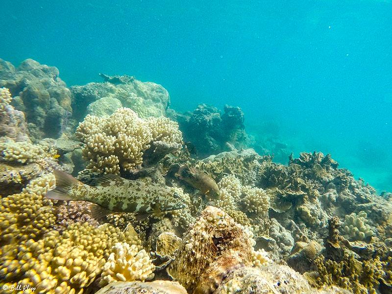 Underwater, Lizard Island, Great Barrier Reef, Australia, Photos
