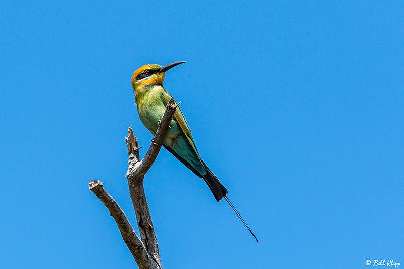 Rainbow Bee-Eater, Lizard Island, Great Barrier Reef, Australia, Photos by Bill Klipp