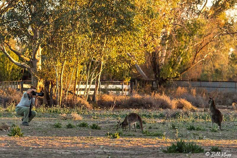 Bowra Reserve, Cunnamulla, Australia, Photos by Bill Klipp