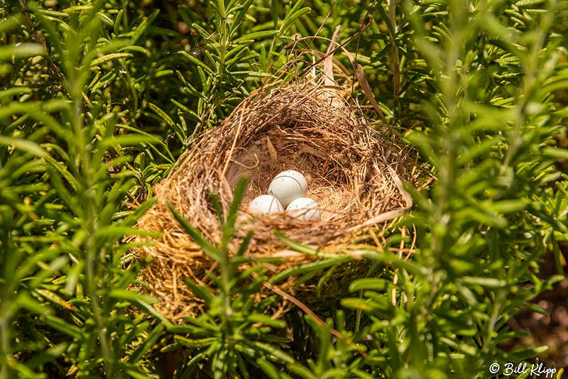 Sparrow Nest, Delta Wanderings, Discovery Bay, Photos by Bill Klipp