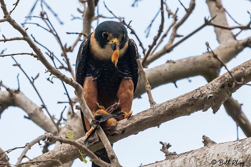 Pousada Piuval, Pantanal Brazil Photos by Bill Klipp