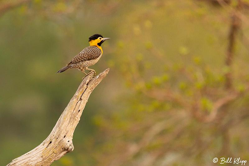 Campo Flicker, Pousada Piuval, Pantanal Brazil Photos by Bill Klipp