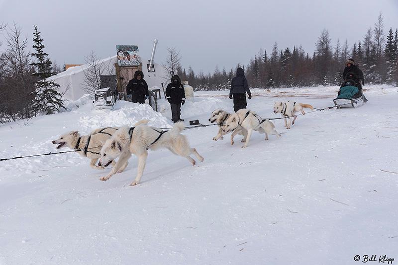 Kelly's Dog Sled Camp, Churchill River Mushing, Churchill Canada Photos by Bill Klipp