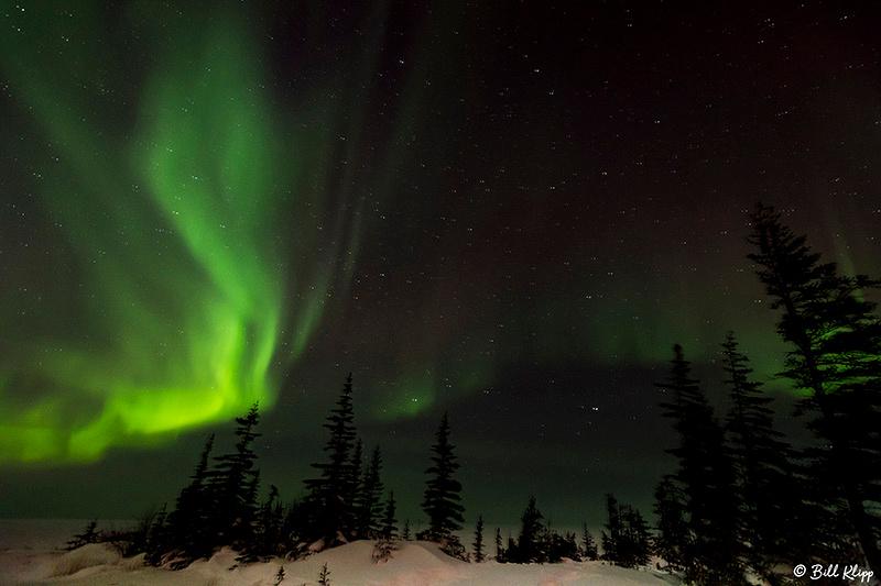 Aurora Borealis, Northern Lights, TL1 Churchill, Canada Photos by Bill Klipp