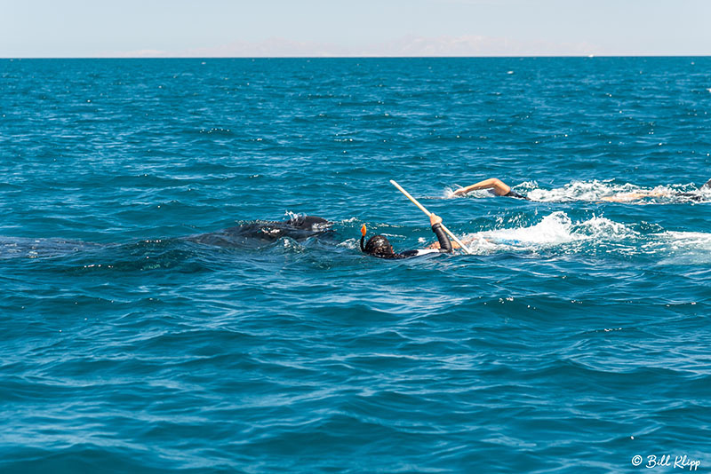 Whale Shark Research, Sea of Cortez, Baja Photos by Bill Klipp
