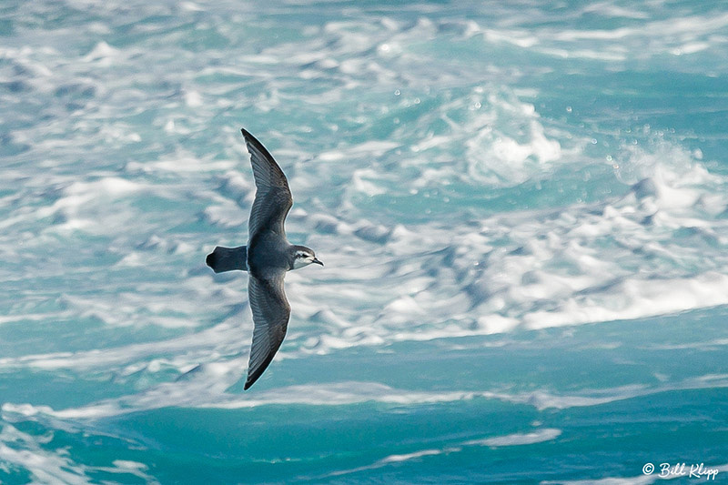 Drake Passage, Southern Ocean Antarctica Photos by Bill Klipp
