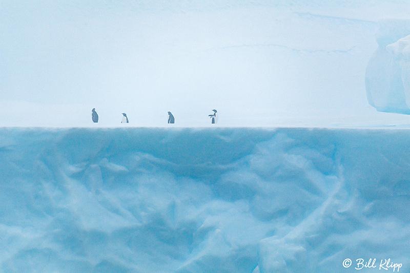 Point Wild, Elephant Island, Weddell Sea, Antarctica, Nov 2017,