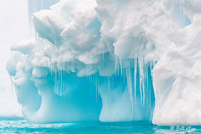 Cuverville Island, Errera Channel, Antarctica, Nov 2017, Photos by Bill Klipp