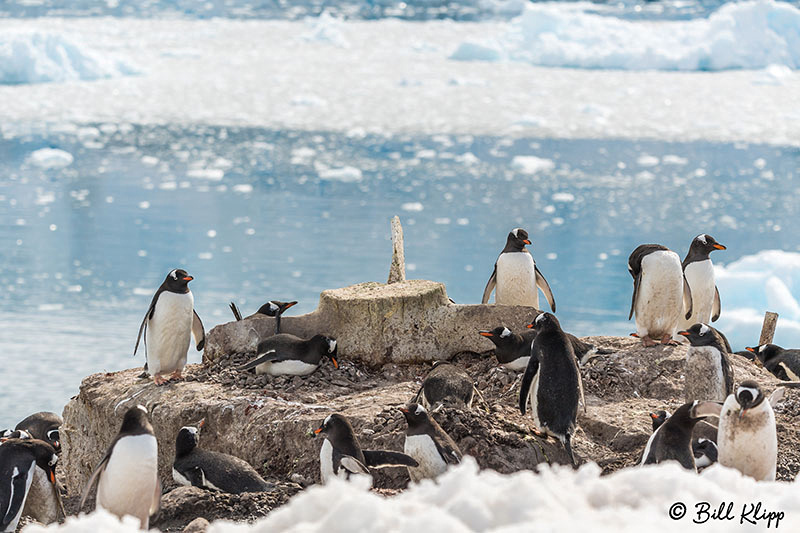 Neko Harbour, Gerlache Straits, Antarctica, Nov 2017, Photos by Bill Klipp