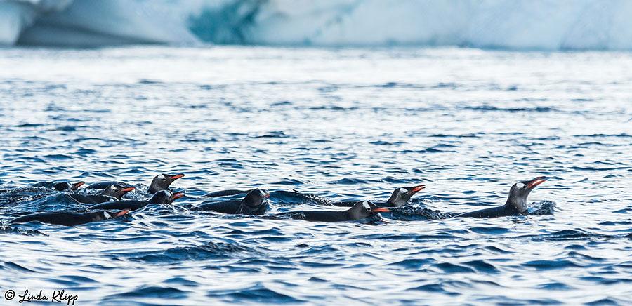 Danco Island, Danco Coast, Errera Channel Photos by Linda Klipp