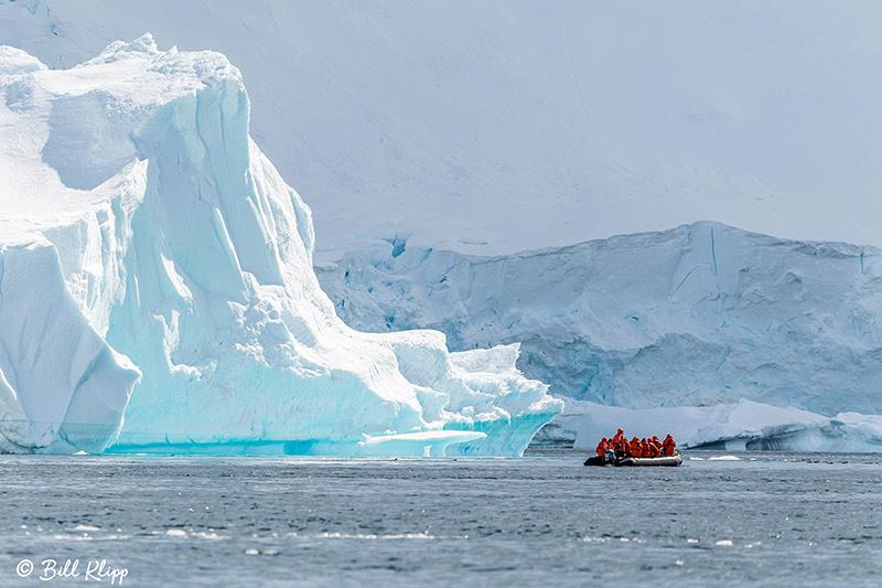 Danco Island, Errera Channel, Antarctica, Nov 2017, Photos by Bill Klipp