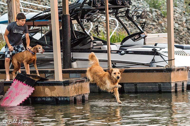 Dog, Discovery Bay, Photos by Bill Klipp