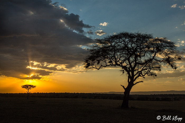 Serengeti National Park, Serian North Alex Walker Camp